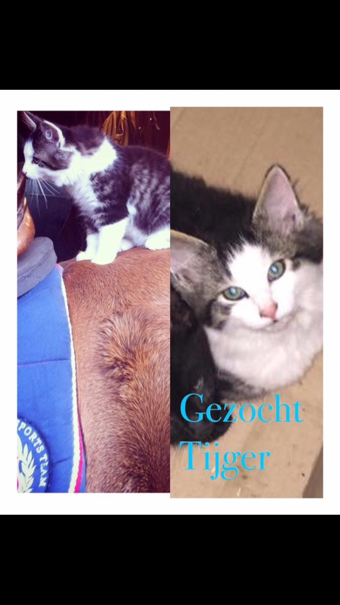 Gezocht onze kat Tijger